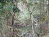 Dscfgorufu0046